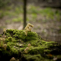 little mushrooms growing on the green moss in a forest with glit