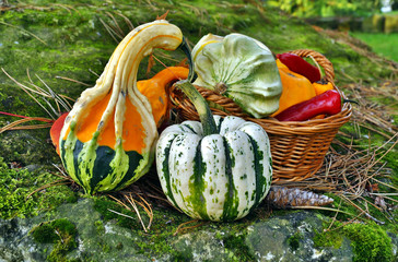 Autumn pumpkins - Decorative pumpkin and vegetables