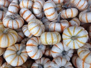 autumn small gourds