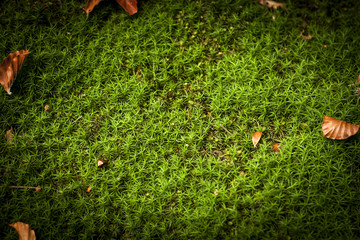 green grass autumn background