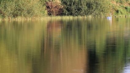 See mit Schwan in der Abendsonne