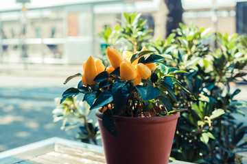 Plant on table outside
