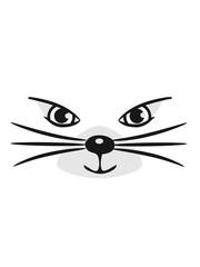 Katze süss niedlich