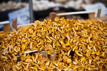 Chanterelles selling in a market