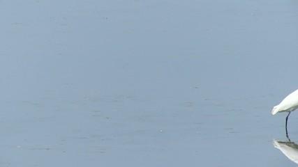 水に映り込んだ干潟のサギ_2