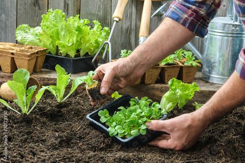 Farmer planting young seedlings - 70173930