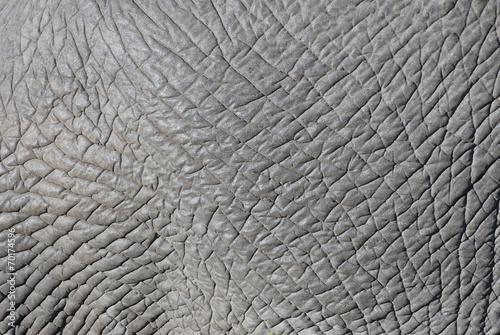 Poster Olifant Elephant skin