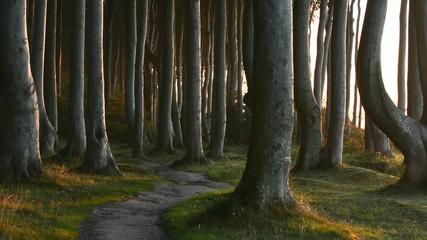 Verwunschener Weg durch Buchenwald