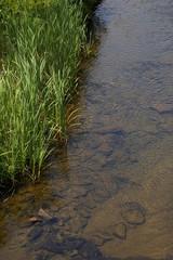 Gras am Ufer