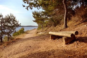 Wooden bench in national park Premantura