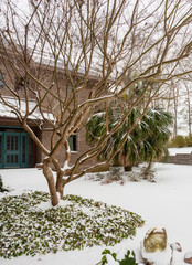 Unusual snow on palm trees in southeastern united states