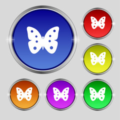 Butterfly sign icon. insect symbol. Set colourful buttons.