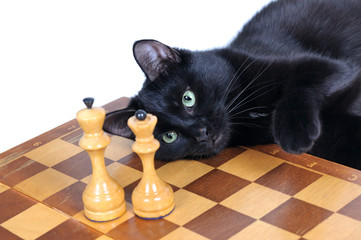 Black cat lying on the chessboard looks at the figures isolated