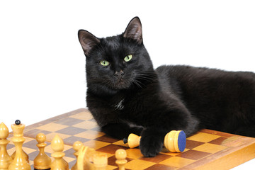 Black cat lying on the chessboard with figures isolated on white