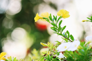 Yellow flowers in bokeh background