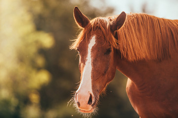 horse in the paddock, Outdoors
