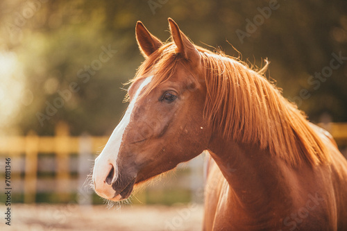 Foto op Canvas Paarden horse in the paddock, Outdoors
