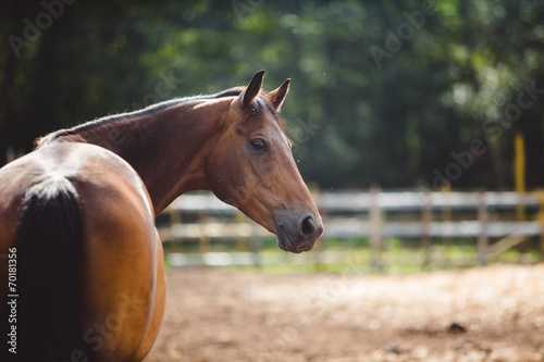 horse in the paddock, Outdoors - 70181356