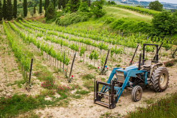 Vines on the field and a blue tractor