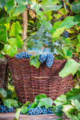 Grapes and wine in a wicker basket