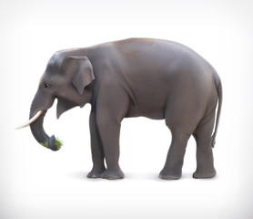 Elephant, vector illustration