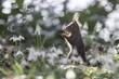 canvas print picture - Eichhörnchen im Frühling II