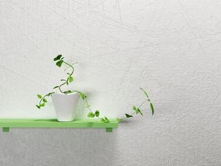 a plant on the shelf