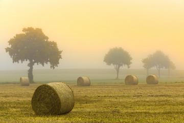 Strohrollen Nebel Morgenstimmung