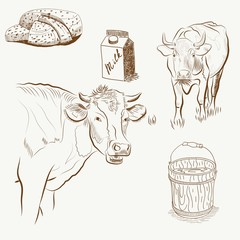 Set of cows and milk