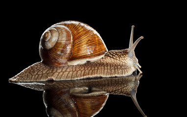 Side view of crawl snail