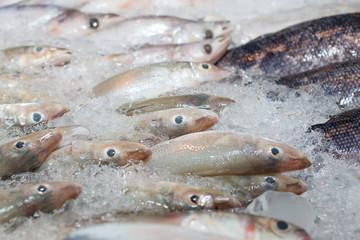 Fish frozen in ice
