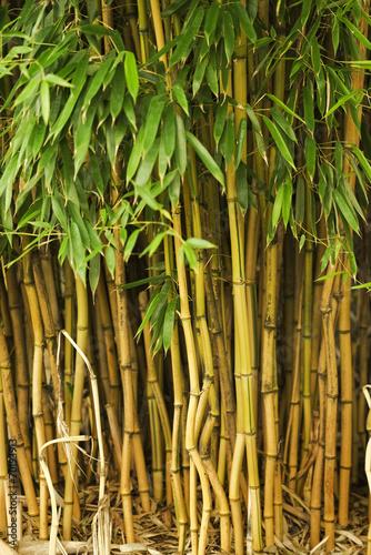 In de dag Bamboo Bambuswald