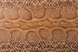 Fototapety Brown snake pattern imitation, background
