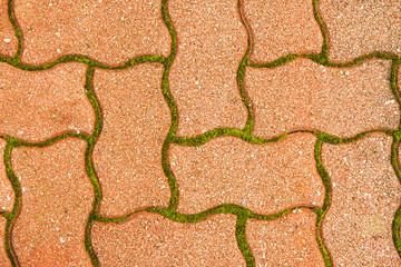 Cobblestone pavement in between - green moss