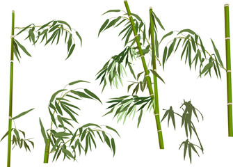 five green bamboo branches collection on white