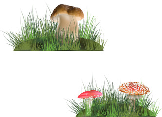 mushrooms in grass isolated on white