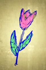 pinkfarbene Tulpe