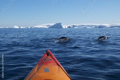 Keuken foto achterwand Antarctica Kayak and diving penguins (Antarctica)