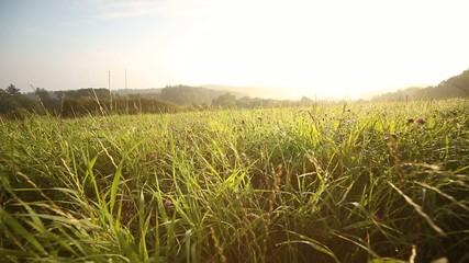 Wiese am Morgen mit Morgentau