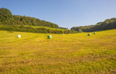 Plastic bales of hay lying in a meadow