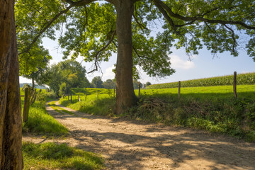 Road through the countryside in summer