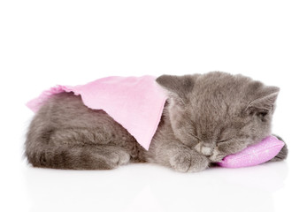 cute baby kitten sleeping on pillow. isolated on white backgroun