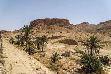 Oasis Túnez