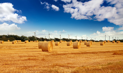 straw bales on a field