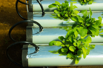 Sophisticated Hydroponic System Growing Arugula