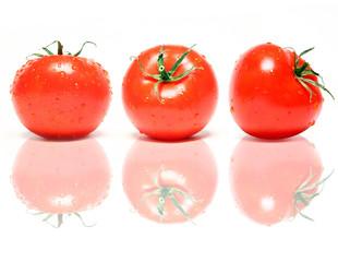 Tomaten in einer Reihe