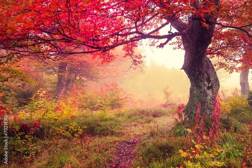 autumn forest - 70214313