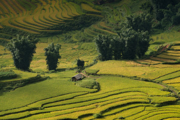 Rice Terraces and home in Sapa, Vietnam