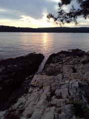 Sea landscape with pine