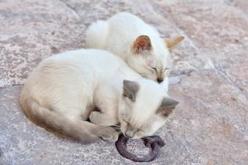 Riposino tra amici